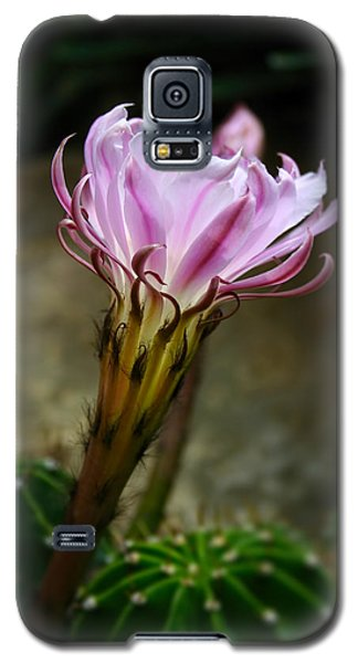 Cactus Flower Galaxy S5 Case by Ron Grafe