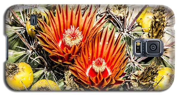 Cactus Flowers And Fruit Galaxy S5 Case