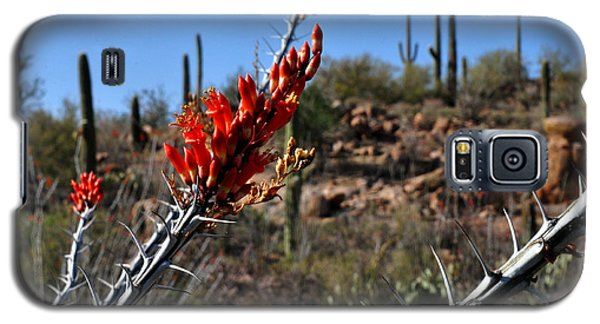 Galaxy S5 Case featuring the photograph Cactus Flowers by Diane Lent