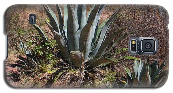 Cactus In Peru Galaxy S5 Case
