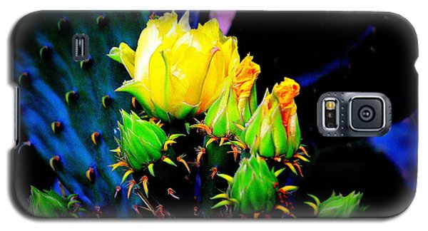 Galaxy S5 Case featuring the photograph Cactus Rose by Antonia Citrino