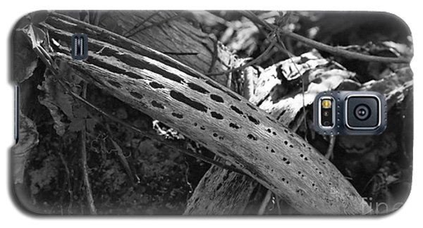 Galaxy S5 Case featuring the photograph Cactus Skeleton by Kenny Glotfelty