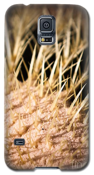Galaxy S5 Case featuring the photograph Cactus Skin by John Wadleigh