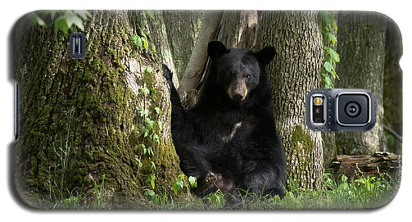 Cades Cove Bear Galaxy S5 Case