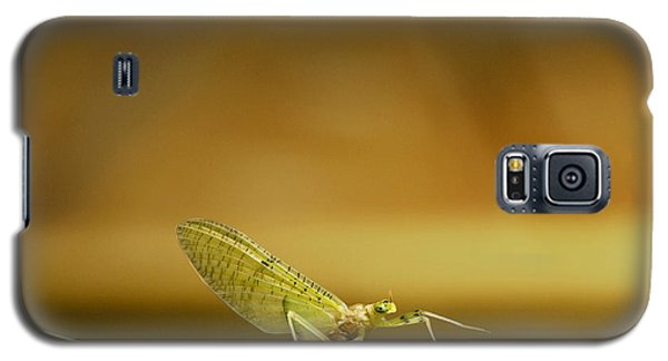 Cahill Mayfly Galaxy S5 Case