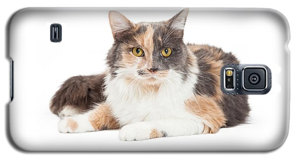 Calico Domestic Longhair Cat Laying Galaxy S5 Case