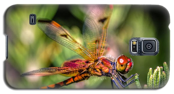 Calico Pennant Galaxy S5 Case by Rob Sellers