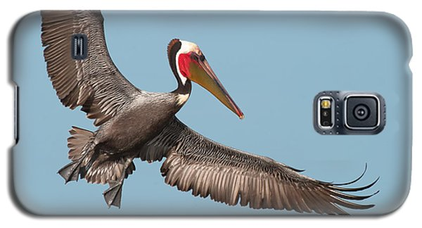 Galaxy S5 Case featuring the photograph California Brown Pelican With Stretched Wings by Ram Vasudev