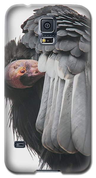 California Condor Galaxy S5 Case