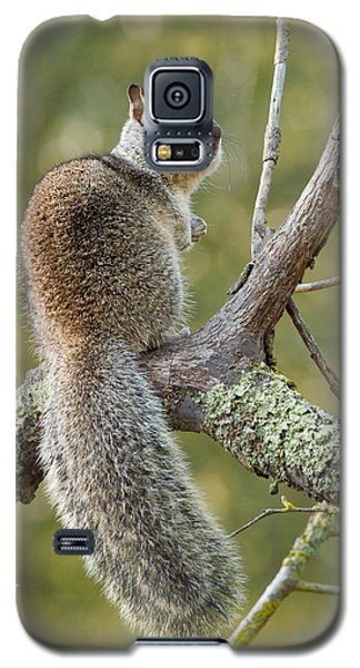 Galaxy S5 Case featuring the photograph California Ground Squirrel by Doug Herr