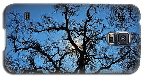 California Oak Sun Tree Galaxy S5 Case