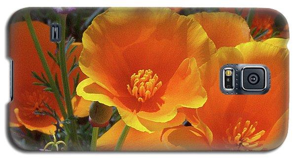 California Poppies Galaxy S5 Case