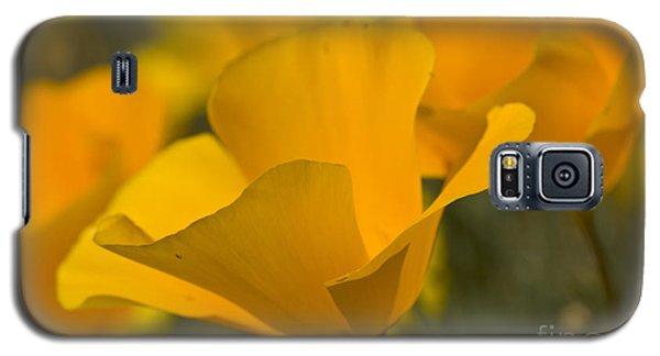 California Poppies Galaxy S5 Case by Bryan Keil
