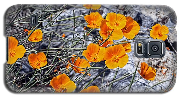 Galaxy S5 Case featuring the photograph California Poppies by William Havle