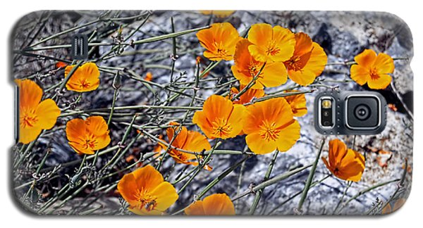 California Poppies Galaxy S5 Case by William Havle