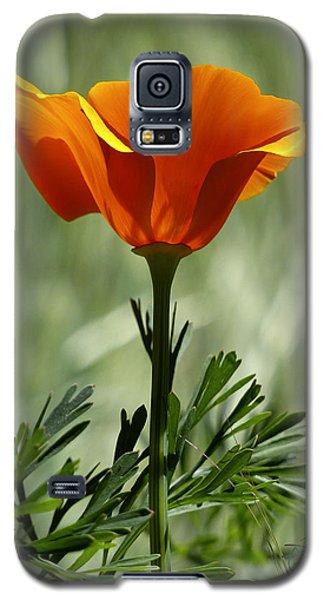 California Poppy Galaxy S5 Case
