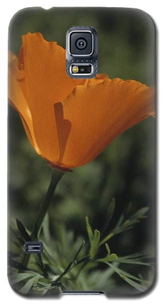 California Poppy Close Up Galaxy S5 Case