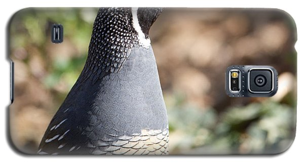 California Quail Close-up Profile Galaxy S5 Case