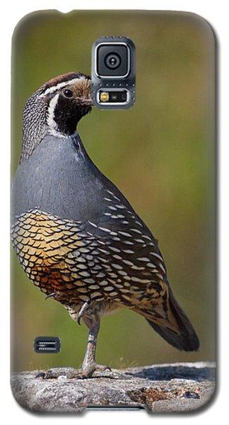 California Quail Galaxy S5 Case by Doug Herr