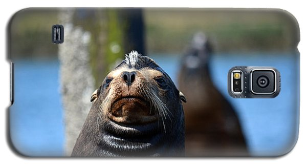 California Sea Lion Galaxy S5 Case