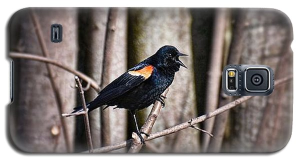 Call Of The Red Winged Blackbird Galaxy S5 Case by Henry Kowalski