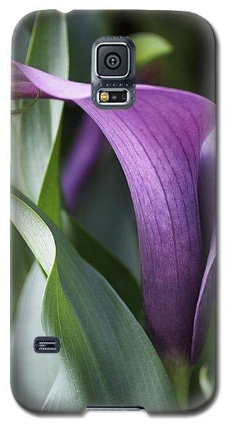 Calla Lily In Purple Ombre Galaxy S5 Case