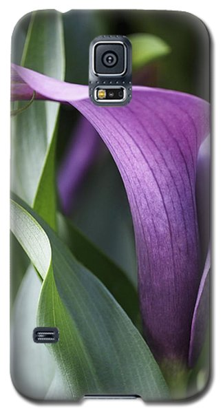 Lily Galaxy S5 Case - Calla Lily In Purple Ombre by Rona Black