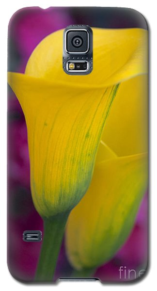 Calla Lily - Yellow Galaxy S5 Case by Vinnie Oakes