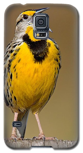 Galaxy S5 Case featuring the photograph Calling Eastern Meadowlark by Jerry Fornarotto