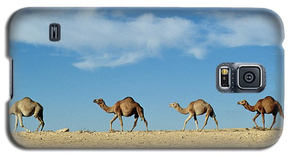 Camel Train Galaxy S5 Case