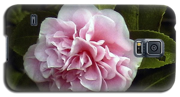 Galaxy S5 Case featuring the photograph Camellia In Rain by Patrick Morgan