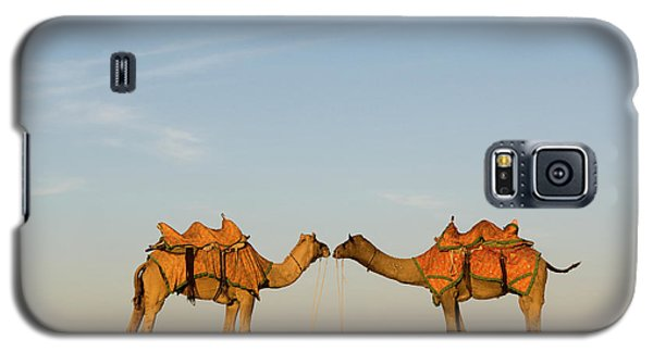 Camels Stand Face To Face In The Thar Galaxy S5 Case