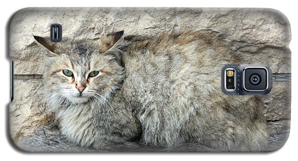 Camo Cat Galaxy S5 Case