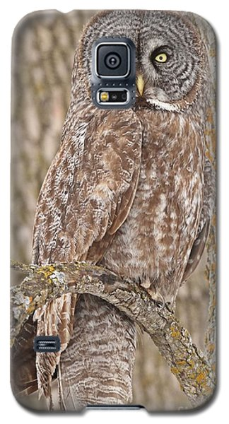 Camouflage-an Owl's Best Friend Galaxy S5 Case
