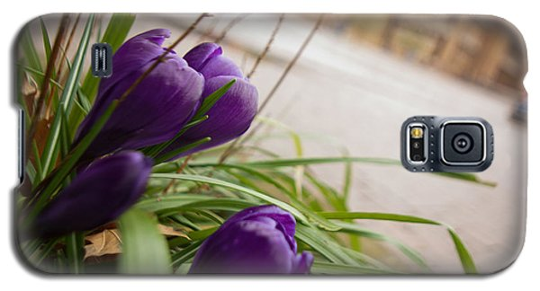 Galaxy S5 Case featuring the photograph Campus Crocus by Erin Kohlenberg