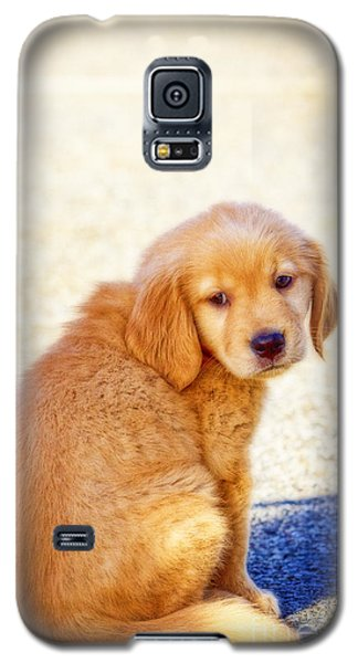 Galaxy S5 Case featuring the photograph Can I Play Too by Eleanor Abramson