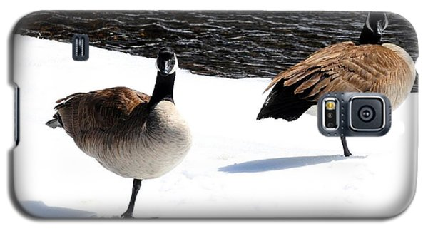 Canada Geese - Cold Feet Galaxy S5 Case by Marilyn Burton