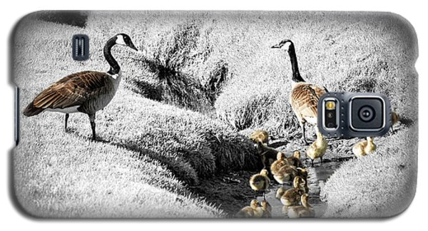 Canada Geese Family Galaxy S5 Case by Elena Elisseeva