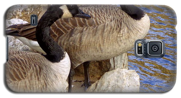 Galaxy S5 Case featuring the photograph Canada Geese by Joseph Skompski
