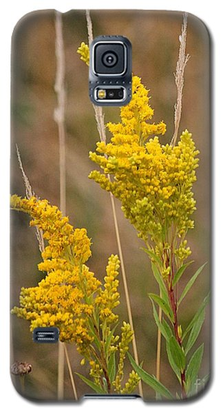 Galaxy S5 Case featuring the photograph Canada Goldenrod by Erica Hanel