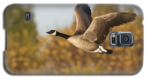 Galaxy S5 Case featuring the photograph Canada Goose In The Skies  by Bryan Keil