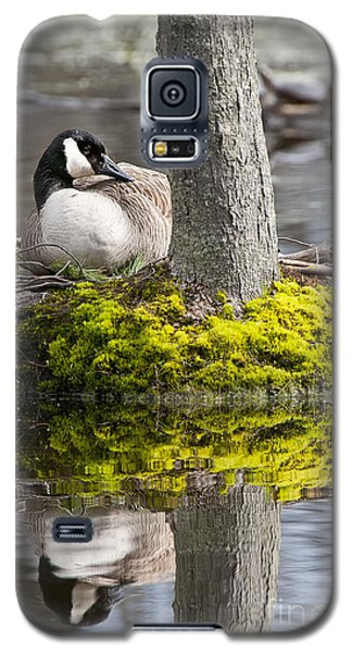 Canada Goose On Nest Galaxy S5 Case