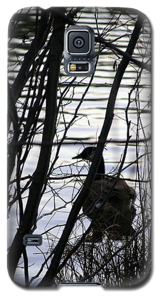 Galaxy S5 Case featuring the photograph Canada Goose by Paula Tohline Calhoun