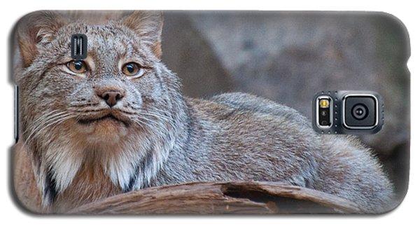 Canada Lynx Galaxy S5 Case by Bianca Nadeau