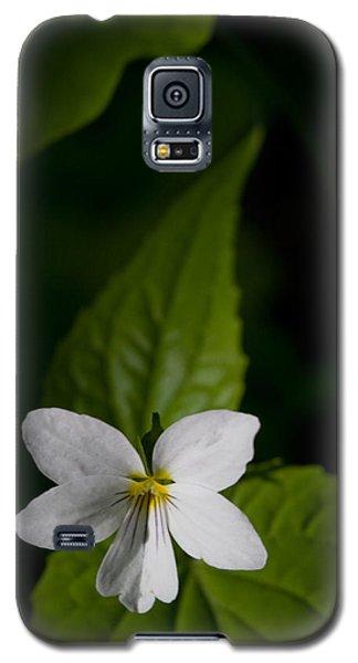 Canada Violet Galaxy S5 Case by Melinda Fawver