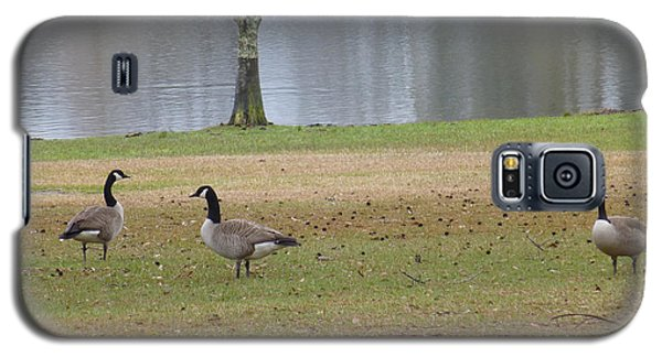 Canadian Geese Tourists Galaxy S5 Case