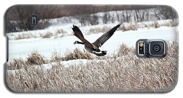 Galaxy S5 Case featuring the photograph Canadian Goose by Ryan Crouse