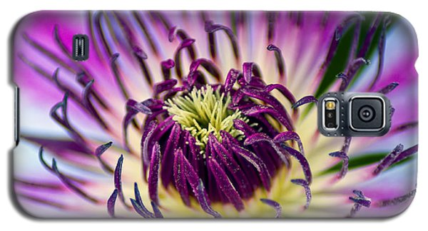 Candy Stripe Clematis Galaxy S5 Case