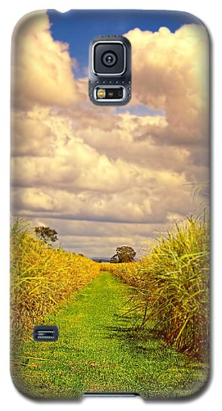 Galaxy S5 Case featuring the photograph Cane Fields by Wallaroo Images