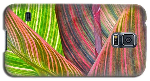Canna Tropicana Color Galaxy S5 Case by Eve Spring